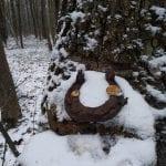 Eski orman yolunda bulduklarım