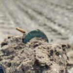 Anfibio Dedektörümle Plaj ve Tarlada Bulduklarım